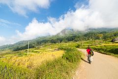 Stunning rice paddies exploration Stock Images