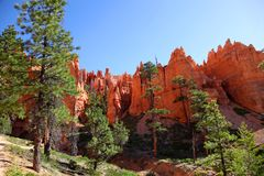 Stunning rock formations and ponderosa pines in Bryce Canyon National Park Stock Photos