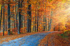 Stunning romantic road in the autumn colorful forest Stock Image