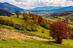 Stunning rural landscape in mountains. Woodshed and trees with red foliage on grassy hillside and a village in a far distance. gorgeous autumn scenery with Stock Photos