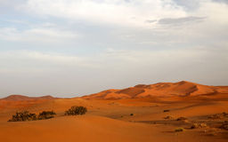 Stunning sand dunes Royalty Free Stock Photography