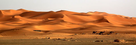 Stunning sand dunes Stock Photos