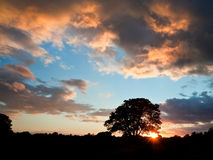 Stunning Sumer sunset silhouette with sun Stock Photography