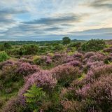 Stunning Summer sunset landscape image of Bratley View in New Fo. Beautiful Summer sunset landscape image of Bratley View in New Forest National Park England Stock Photo