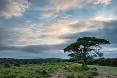 Stunning Summer sunset landscape image of Bratley View in New Fo Royalty Free Stock Images
