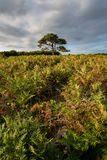 Stunning Summer sunset landscape image of Bratley View in New Fo. Beautiful Summer sunset landscape image of Bratley View in New Forest National Park England Royalty Free Stock Image