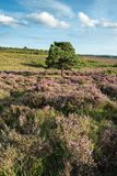 Stunning Summer sunset landscape image of Bratley View in New Fo. Beautiful Summer sunset landscape image of Bratley View in New Forest National Park England Royalty Free Stock Photo
