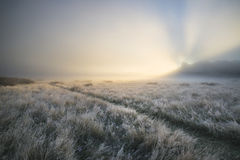 Stunning sun beams light up fog through thick fog of Autumn Fall Stock Photo