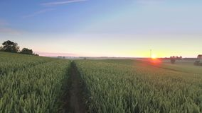 Stunning sunrise over a field with grain in summer. Poland stock footage