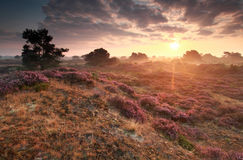 Stunning sunrise over hills with heather flowers Royalty Free Stock Photo