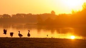 Stunning sunrise silhouette. Birds enjoying this stunning sunrise scene on the lake Royalty Free Stock Images