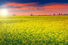Stunning sunset and canola field,Transylvania,Romania,Europe Stock Photo