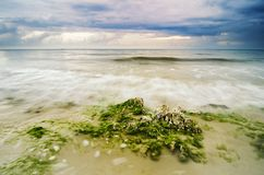 Stunning sunset moment with soft wave hitting the stone covered with green algae on the beach Royalty Free Stock Photography