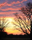 Stunning sunset with tree silhouette Royalty Free Stock Images