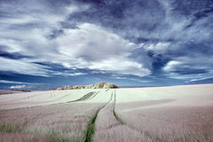 Stunning surreal false color infrared Summer landscape over agri Royalty Free Stock Photography