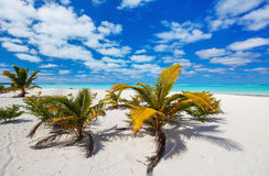 Stunning tropical beach at exotic island in Pacific Royalty Free Stock Photography