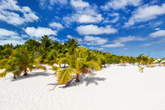 Stunning tropical beach at exotic island in Pacific Royalty Free Stock Image