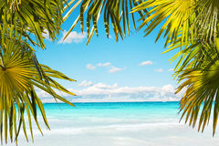 Stunning tropical beach Royalty Free Stock Photo
