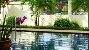 Stunning tropical resort with a swimming pool drowning in greenery and frangipani flowers in Thailand. 3840x2160 stock footage