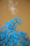 Stunning unusual false color tree and sky landscape Stock Photo