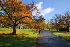 Stunning vibrant Autumn landscape of path through park Royalty Free Stock Image