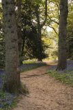 Stunning vibrant landscape image of blubell woods in English cou Stock Photo