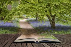 Stunning vibrant landscape image of blubell woods in English cou Stock Images