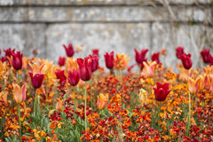 Stunning vibrant shallow depth of field landscape image of flowe Royalty Free Stock Photography