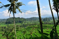 Stunning view on green rice terraces in Bali Royalty Free Stock Images