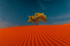 Stunning view of lonely sand dunes. Stunning view of rippled sand dunes and lonely tree growing under amazing blue sky at drought desert landscape. Global royalty free stock image