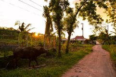 Stunning View Of The Sun Setting Over Rural Life On The Island Of Cebu, Philippines Royalty Free Stock Photography
