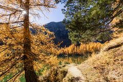 Stunning view of the Palpuogna lake near Albula pass with golden trees in autumn Stock Photo