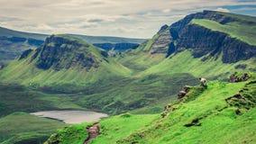 Stunning view to sheeps in Quiraing, Isle of Skye, Scotland Stock Image