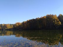 Autumn reflection of the forest in the water. royalty free stock images