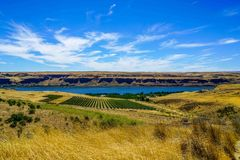 Stunning Vineyard. A stunning vineyard along the Columbia River in Washington State stock photo