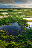 Stunning Wetland landscape in Pantanal located in Brazil Royalty Free Stock Photos