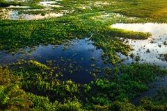Stunning Wetland landscape in Pantanal located in Brazil Stock Image