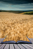 Stunning wheat field landscape under Summer stormy sunset sky co Royalty Free Stock Photography
