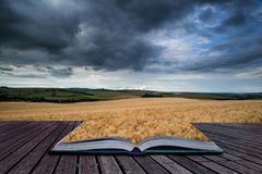 Stunning wheat field landscape under Summer stormy sunset sky co Stock Photo