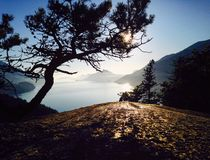 Stunted tree overlooking the Pacific Ocean near sunset. A stunted tree high atop a scenic viewpoint near Squamish, British Columbia, Canada, overlooking the Stock Photo