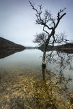 Stunted tree and still water at Loch Pityoulish in the Cairngorms National Park of Scotland. Stunted tree on Loch Pityoulish in the Cairngorms National Park of Royalty Free Stock Images