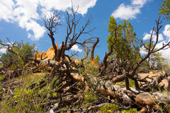 Stunted vegetation in the desert Royalty Free Stock Photography