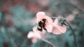 Stuntel de spruit van de bijenclose-up royalty-vrije stock afbeeldingen