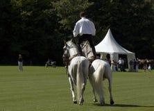 Stuntman auf Pferden Stockfoto
