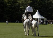 Stuntman em cavalos Foto de Stock