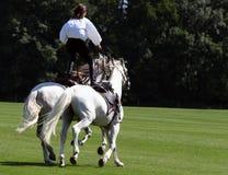Stuntwoman auf zwei Pferden Stockbild