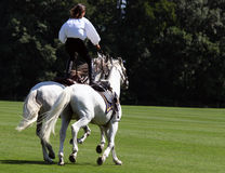 Stuntwoman en dos caballos Imagen de archivo