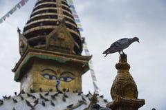 Stupa и голуби, stupa kathesimbhu, Катманду, Непал стоковая фотография rf