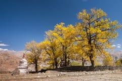 Белое буддийское stupa с деревьями autum Стоковые Фотографии RF
