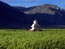 Stupa in barley field. In Zanskar Royalty Free Stock Photography
